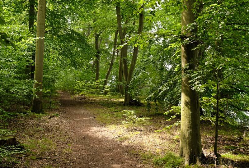 Wald bei Altwarp